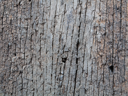 decay: Decay wood texture background Stock Photo