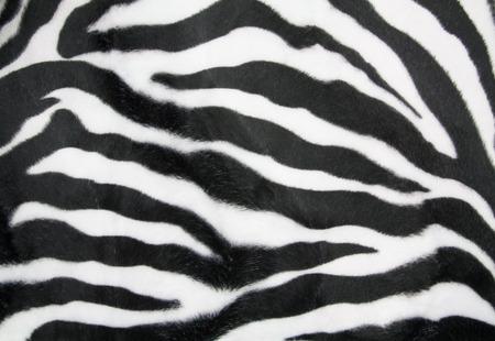 zebra print: Zebra texture background