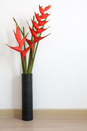 heliconia: heliconia flower in room empty Stock Photo