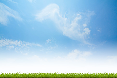 front or back yard: Fresh spring green grass with blue sky background Stock Photo