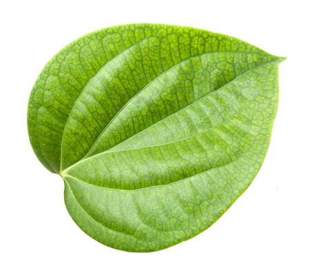 betel leaf: betel leaf isolated on white