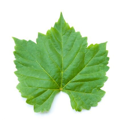 uvas: leaf from the vine on a white background