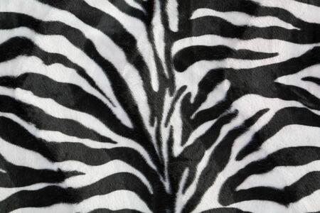 zebra: Textura cebra con el color beige en blanco y negro