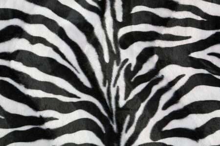 print design: Zebra texture with beige white and black