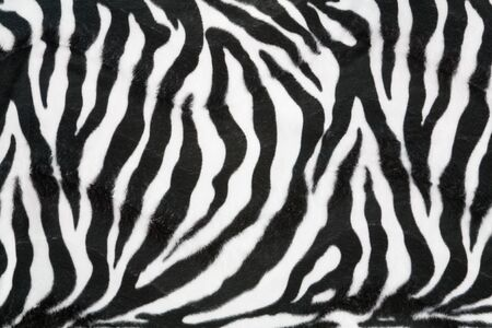 macro texture: Zebra texture with beige white and black