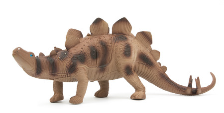 stegosaurus: Stegosaurus dinosaurio aislado en el fondo blanco