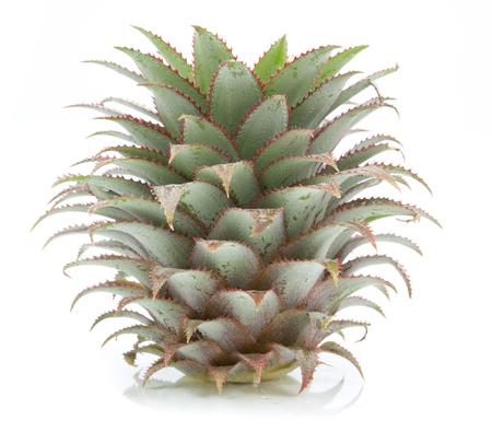 pineapple tree: pineapple tree isolated on white background Stock Photo