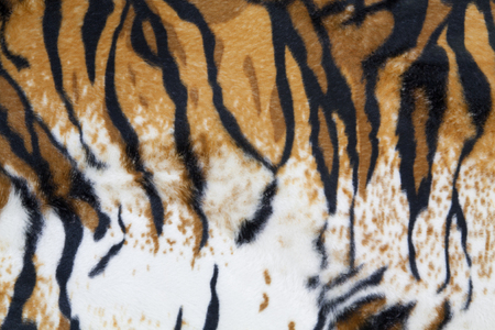 tiger skin: texture of tiger skin background Stock Photo