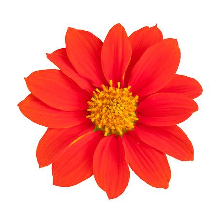 Oranje bloemen met groene achtergrond