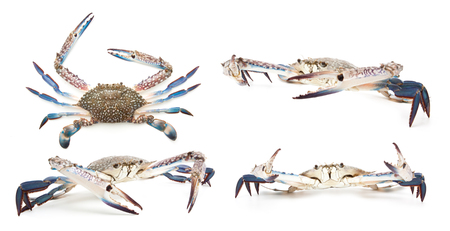 Collection of blue crab isolated on white background Stock Photo