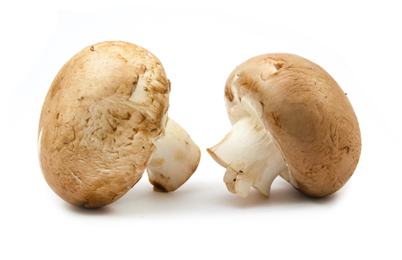 fungoid: fresh champignons brown version isolated on white background