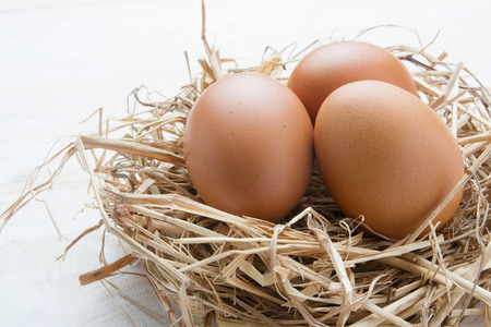 egg in nest on dark vintage wooden background