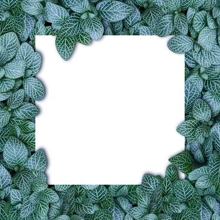 Nature layout made of tropical leaves with paper card note flat lay summer 版權商用圖片