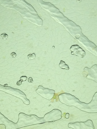 a microscopic view of the leaf surface showing plant cells Stock Photo