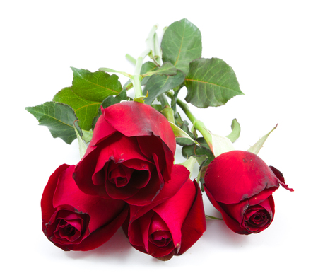 Bouquet de roses rouges en arrière-plan blanc Banque d'images - 95124545