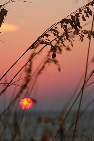 Sea Oats peaceful mauve sunset ocean