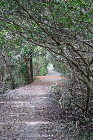 mangroves: Sand trail in Mangroves