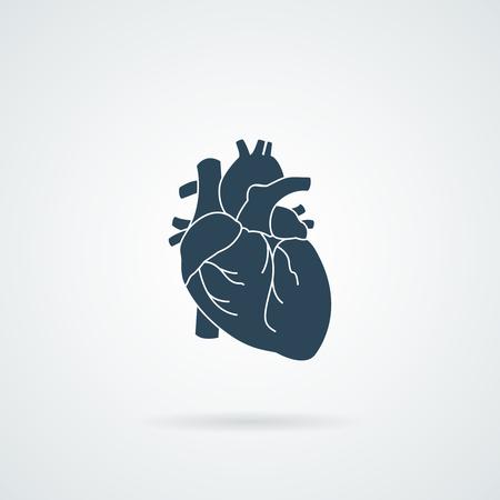 aortic bodies: heart organ human isolated icon illustration design Illustration