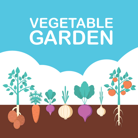 Vegetable garden banner. Organic and healthy food. Poster with root veggies.