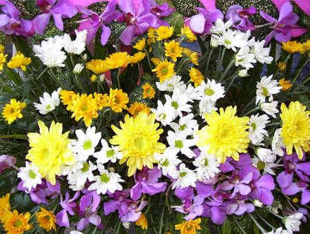 flowers bucket Stock Photo