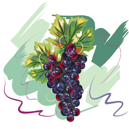Grape in handdrawn style   All grouped and layered