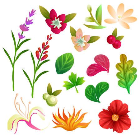 flower and foliage collection set Vectores