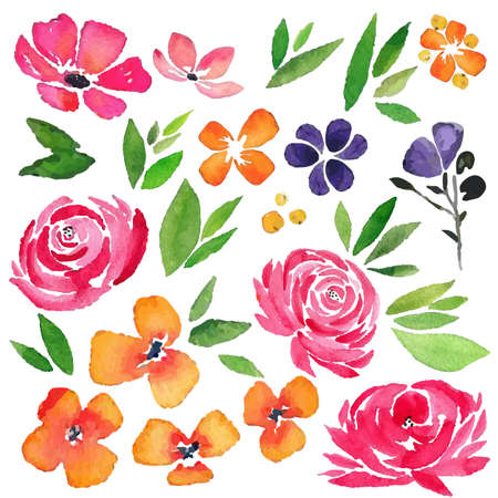 watercolor flower rose element set