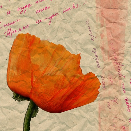 Retro style. Red poppy on a background of crumpled paper with the inscription. photo