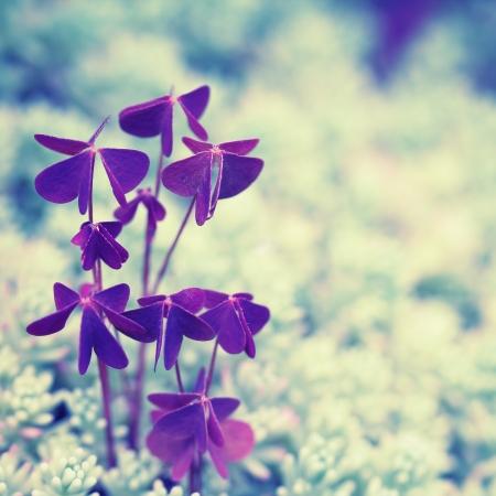herbs wild: Fondo de la vendimia con las hierbas silvestres. Tr�bol en musgo.