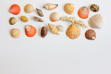 Horizontal frame with sea shells and corals on white background. Collection of sea shells on white. Sea concept. Stock Photo