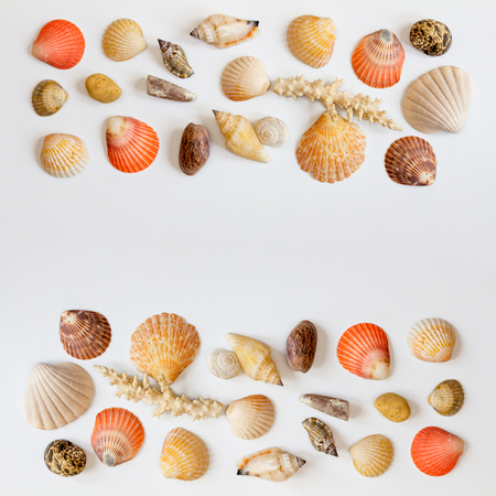 Square frame with collection of seashells and corals on white background. Sea concept. Space for text.