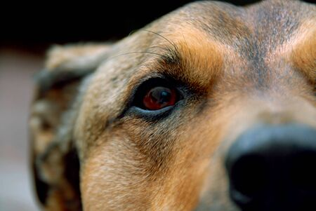 Detail shot of a dogs face.