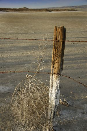 briny: An old fence post and rusted barbed wire traps a tumbleweed on a desert salt flat.