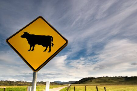 A bright yellow cow sign along a beautiful country road. Stock Photo