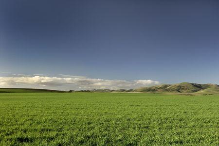 A vibrant field of green grass under a deep blue sky.