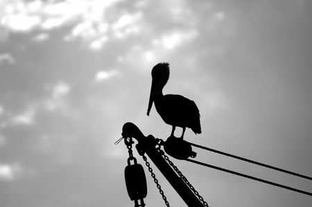 a silhouette of a pelican resting on a fishing boat