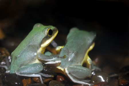 Two frogs sit side by side waiting for dinner to fly nearby.