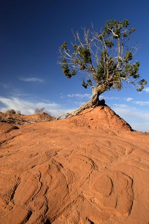 A landscape of tree and red sandstone from Americas beautiful desert near Escalante, Utah.