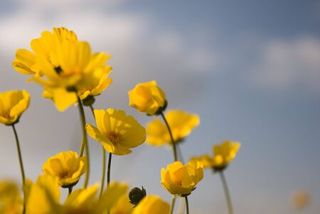 A close up shot of wild yellow flowers