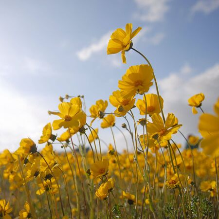 A bugs eye view of yellow wildflowers