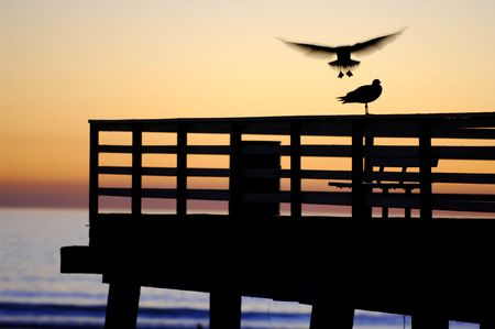 A sea gull caught in flight just before she lands on the pier. A nice silhoette and a hint of motion blur make the photo unique. Stock Photo - 673529