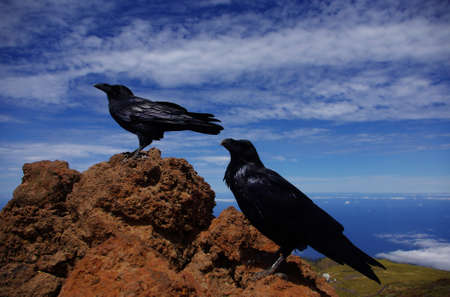 Raven couple contemplates the views from the top of Roque de los Muchachos.