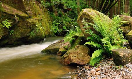 A small stream with wild ferns in the foreground photo
