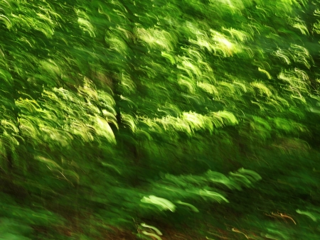 Background formed by blurring spring green forest with sun photo