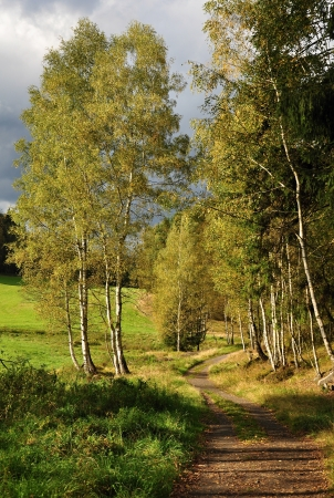 Birch trees around the country lanes at sunset photo
