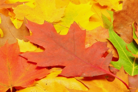 Beautiful, many colorful autumn leaves forming a background photo