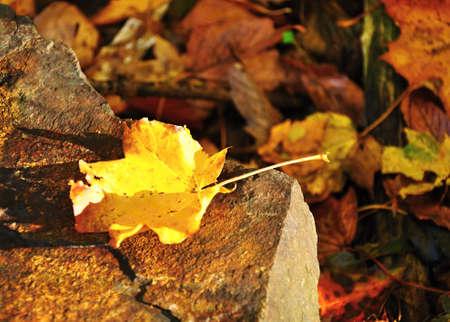 hard rain: Yellow autumn leaf on stone, on which the sun shines Stock Photo