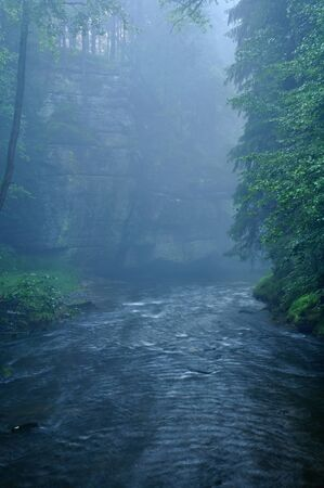 Dark River deep in the forest with fog photo