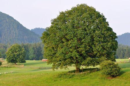 czech switzerland: Vista di un paesaggio bella estate in Svizzera Ceca Archivio Fotografico