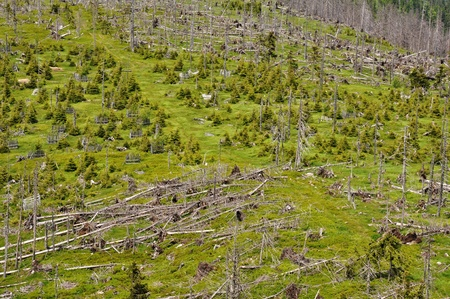 Damaged environment - forest destroyed by bark beetle and hurricane photo